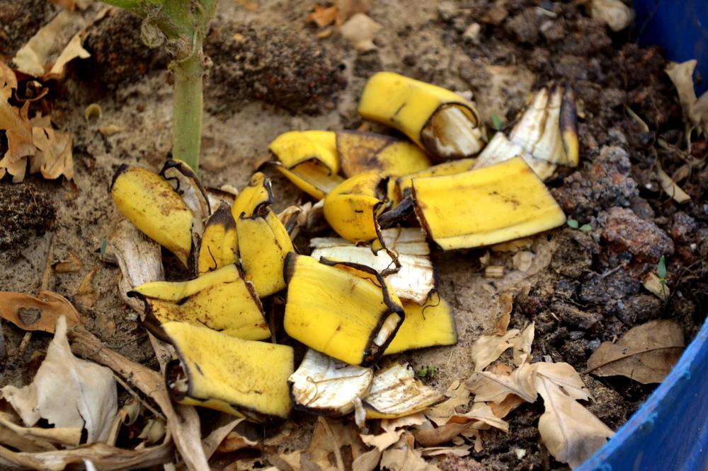 Органические удобрения - Банановая кожура