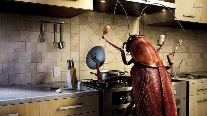 Как бороться с насекомыми в квартире