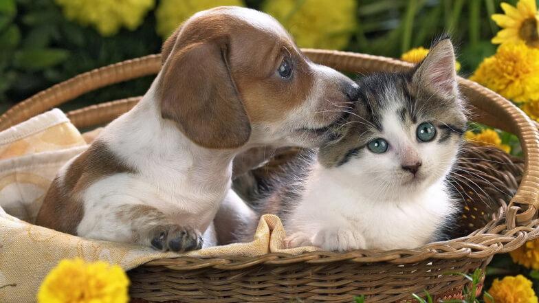 Лучшие темы для разговора - Животные