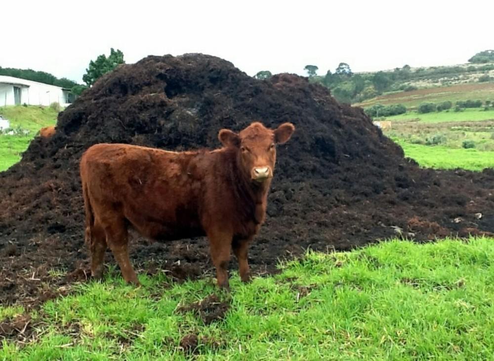 Виды навоза - Коровий